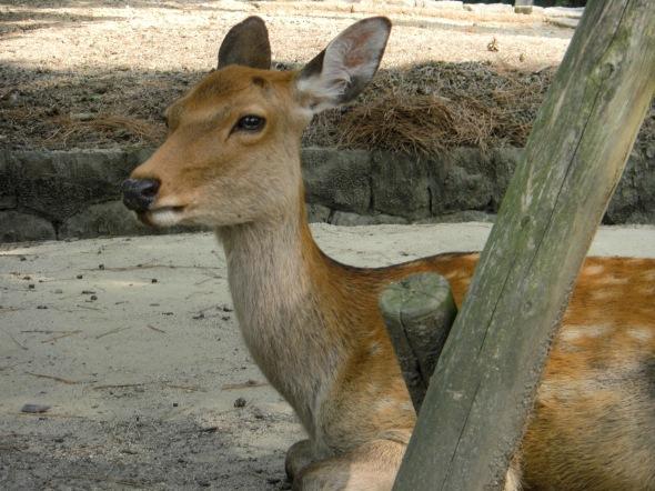Nara-jin