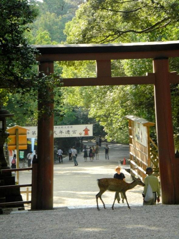 torii et biche