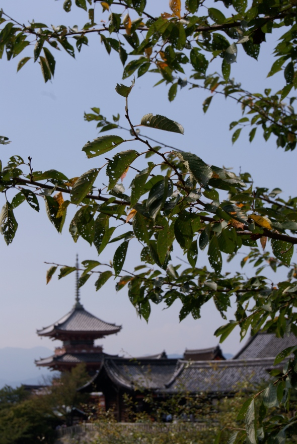 Ginkaku et arbres