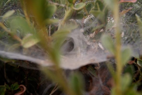 araignée timide