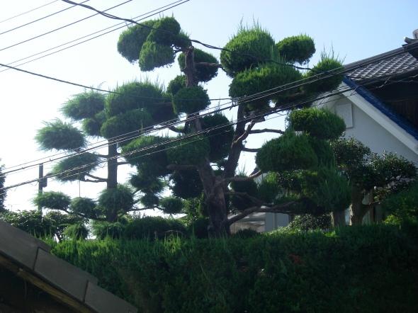 l'arbre des voisins